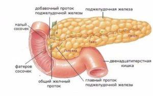 Поджелудочная железа