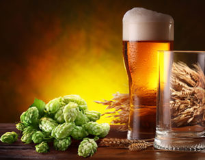 Основные компоненты пива— хмель исолод