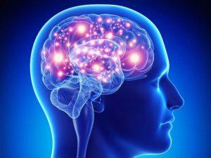 Фенотропил полезен для головного мозга