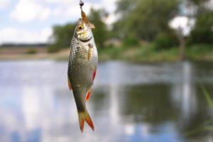 zagovor na ribu