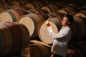 proizvodstvo vin